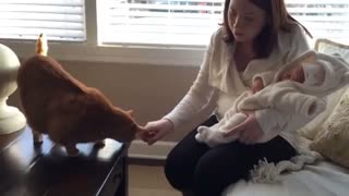 Family cat meets newest edition to family