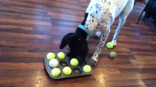This Clever Dog Loves Solving Puzzles For Treats - Video
