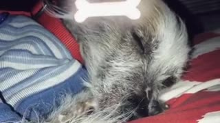 Small dog is sleeping with dog graphics around it  - Video