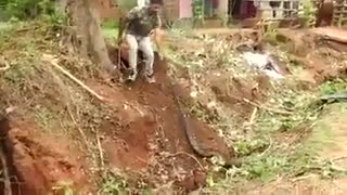 Find A big a dangerous snake from roots of tree  - Video