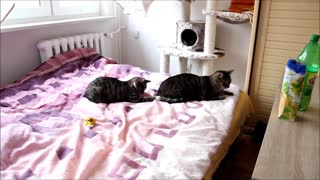 Funny Cats - Video