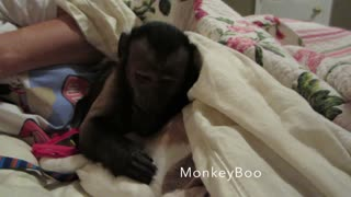 Sleepy Monkey Cuddles With Family Dog Before Bed - Video