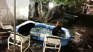 Bears have a late night pool party at this home
