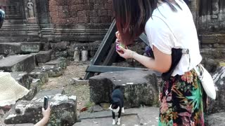 Eating my cute cat so poor in jungle temple