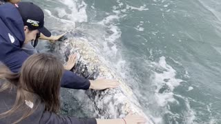 Gray Whale Comes in Close