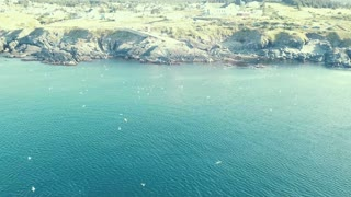 Whales Frolicking and Feeding in Pouch Cove