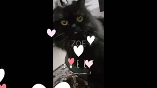 Music black cat sticking tongue out and getting pet - Video