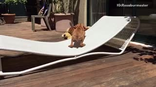 Dog trying to jump on chair but doesn't land