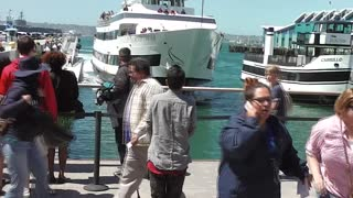 Whale Watching Boat Crashing Into San Diego Dock - Video