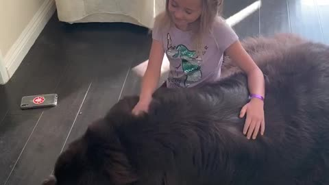 Newfoundland's super sweet good-bye will melt your heart