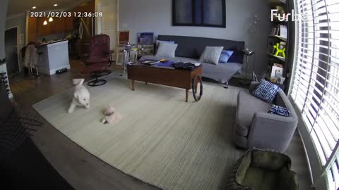 Dog camera hilariously captures this pup's home alone antics