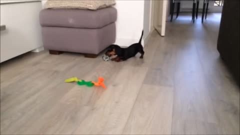 Puppy jumps for joy over new toys