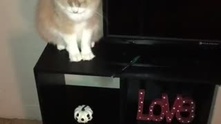 Orange cat pushes pen on the floor  - Video