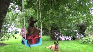 Adorable puppy enjoys relaxing ride on swing