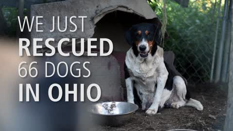 Nearly 70 animals rescued from unsafe and unsanitary living conditions in Ohio