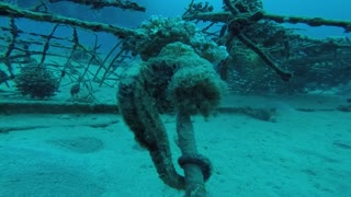 Hippocampus Sea horse in the Red Sea, Eilat Israel