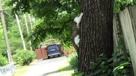 Cat  try to get off of the tree