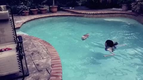 Swimming Pup - Ginger Swims across the pool