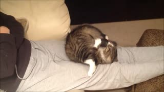 Funny kitten obsessed with own tail