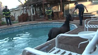 Firefighters rescue horse who fell into owners' pool