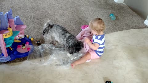 Toddler adorably entertained by puppy chewing bubble wrap