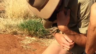 Baby Kangaroo Jumps Into Shirt - Video