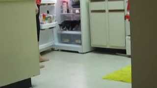 Cat's favorite hangout is inside the refrigerator  - Video