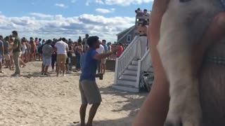 Pug being held up at beach party