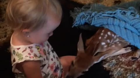 Fawn Suckles On Baby Girl's Fingers In Family Living Room