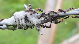 ants group