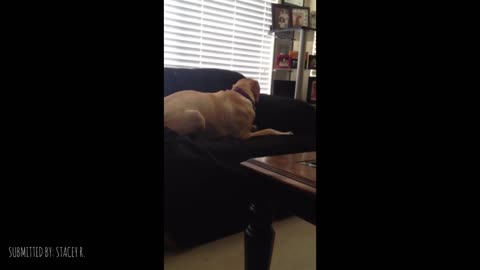 This Dog Proves That Sometimes Our Pups Just Want To Be Goofballs
