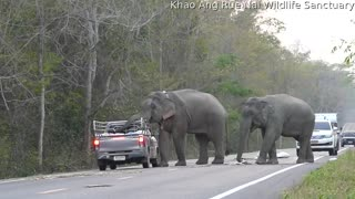 Elephant Ransacks Truck Bed