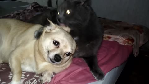 The cat and the dog are inseparable