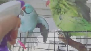 Fun times with parrots