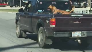 Extremely happy dog goes for ride in pickup - Video