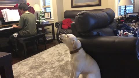 Singing puppy can't stop howling along to piano practice