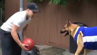 The dog that surprised the world's basketball - Video