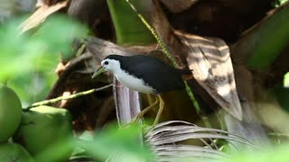 Black and white bird on a fern - With great music