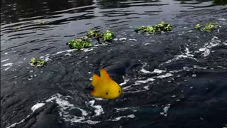 cute fish and green plants are enjoying in water  - Video