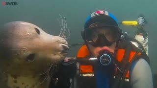 Video shows seal appearing to 'hug' underwater diver