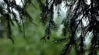 Relaxing Music With Rain & Birds Sound