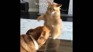 A cat Hitting A Dog on His Face And Running Away