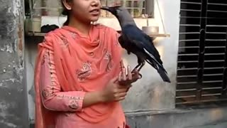 trained crow amazing telnet with girl  - Video