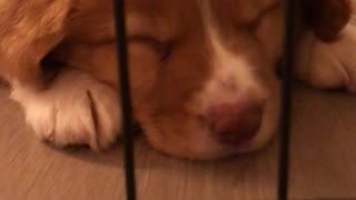 This sleeping puppy is the cutest