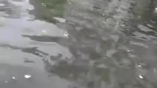 After rain, roads filled with water  - Video