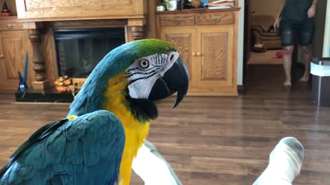 Parrot Tells Owner It Will 'Knock Her Out'