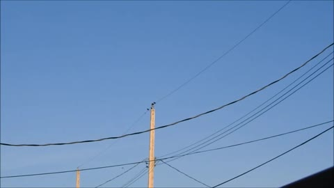 Birds Of A Feather Hang Out On Wires Together