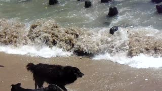 Dogs vs Sea Lions - Video