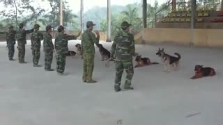 Watch the dogs discipline the army and the soldiers  - Video