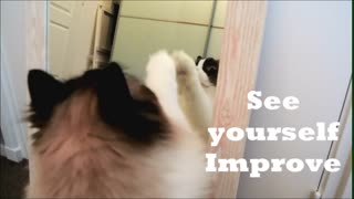 Workout tips for cats! - Video